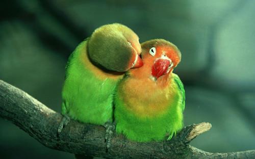 动物的爱意境素材_动物世界也有爱