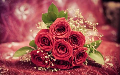 好看玫瑰唯美意境图集