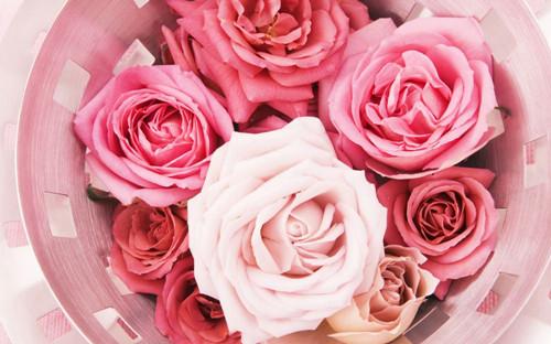 玫瑰花唯美图片_玫瑰花的相伴随 玫瑰意境图集_好看玫瑰的妖 唯美恋情
