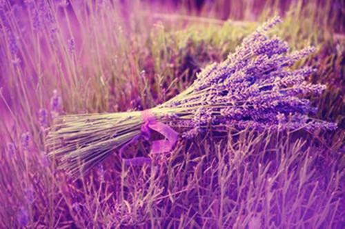 爱情薰衣草唯美图片 薰衣草的约定