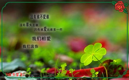 幸福四叶草图片_找寻幸福的爱情图片